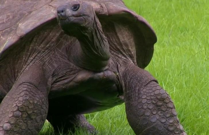 tartaruga vecchia (4)