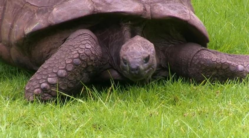 tartaruga vecchia (5)