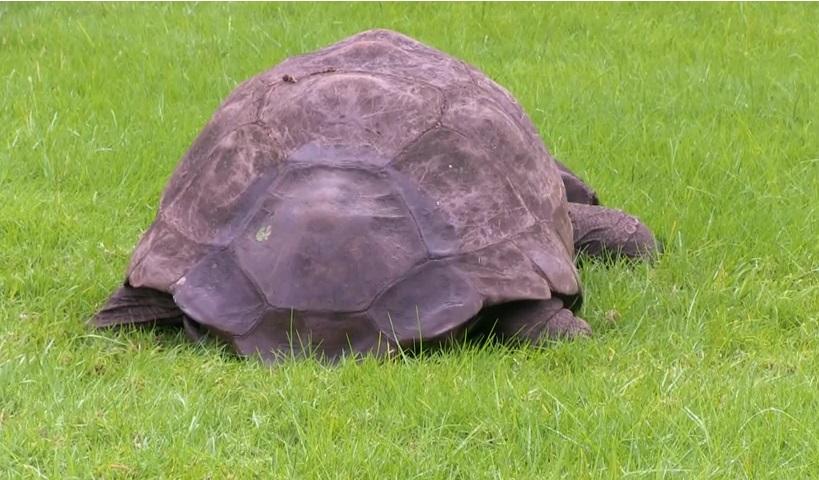 tartaruga vecchia (6)