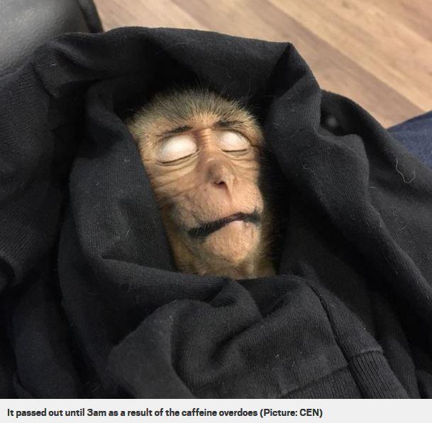 Macaco in overdose da caffè (2)