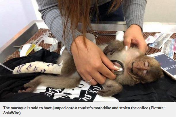 macaco in overdose di caffè