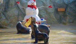 Davy Jones, primo Natale a Gardaland SEA LIFE Aquarium per il cucciolo di Leone Marino
