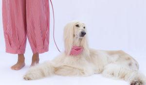 A Milano apre la prima boutique di moda per la donna e il suo cane