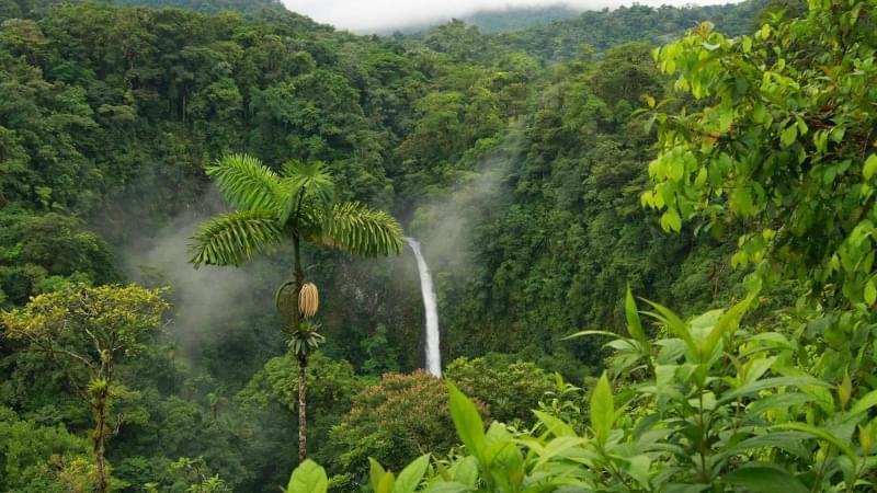 Risultati immagini per amazzonia regione a rischio