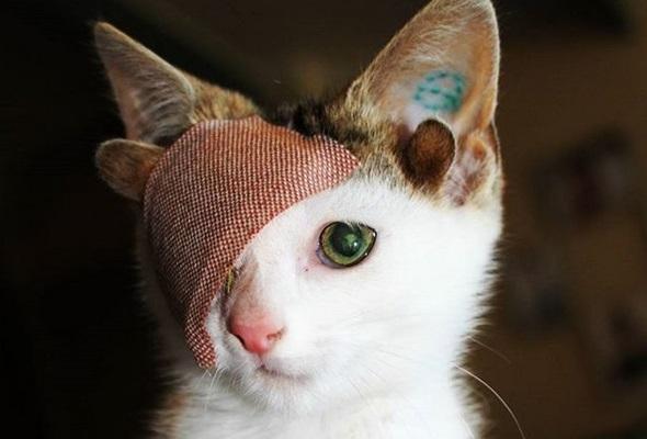 Quattro Orecchie E Un Occhio Tutti Pazzi Per Il Gatto Frankie