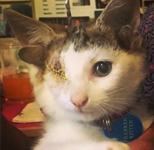 gatto frankie 2