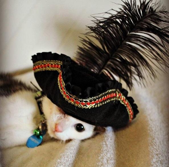 gatto frankie 3