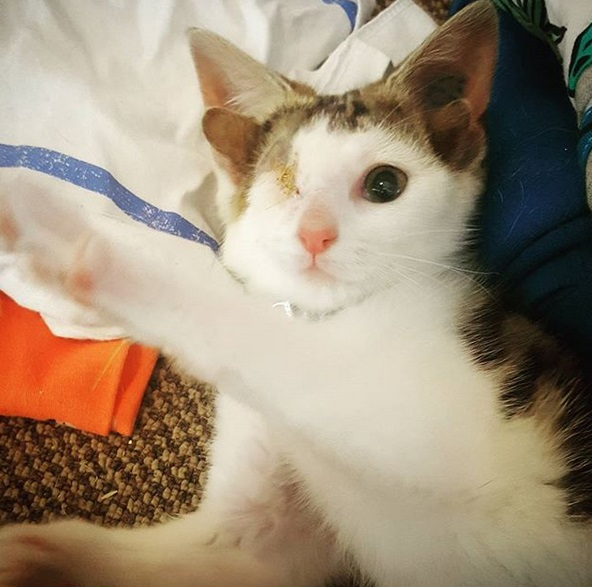 gatto frankie 4
