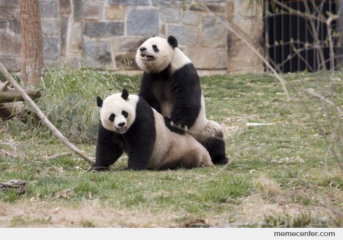 Panda-Sex_o_1253