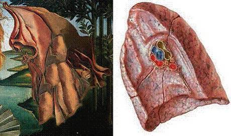 polmone nella venere di Botticelli