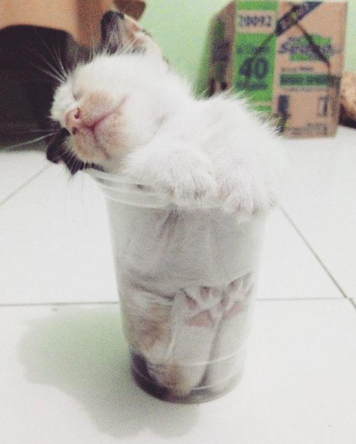 gatti liquidi (21)