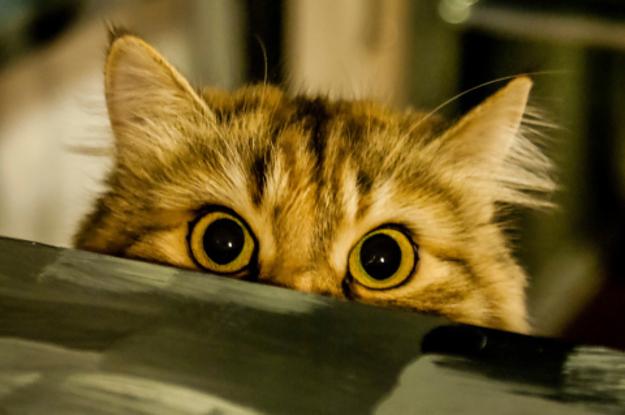 Giappone Il Video Dei Gatti Che Impazziscono Pochi Secondi Prima