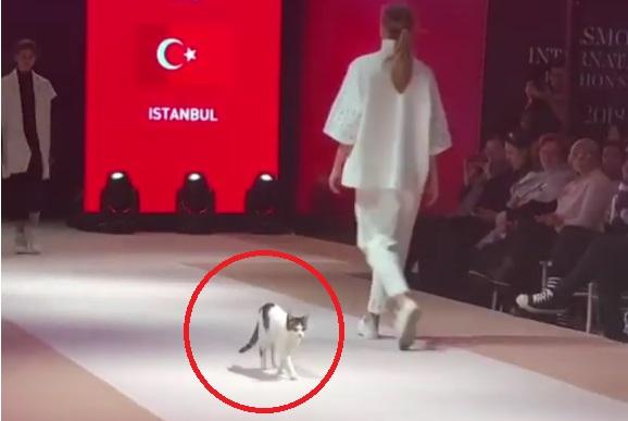 Turchia Gatto Invade La Passerella La Catwalk Diventa Virale Video