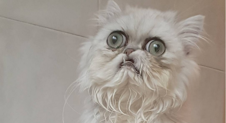 Mamma Che Brutto Il Gatto Wilfred Alla Conquista Di Instagram