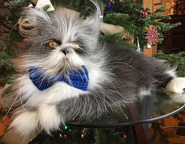 gatto4