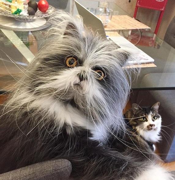 gatto6