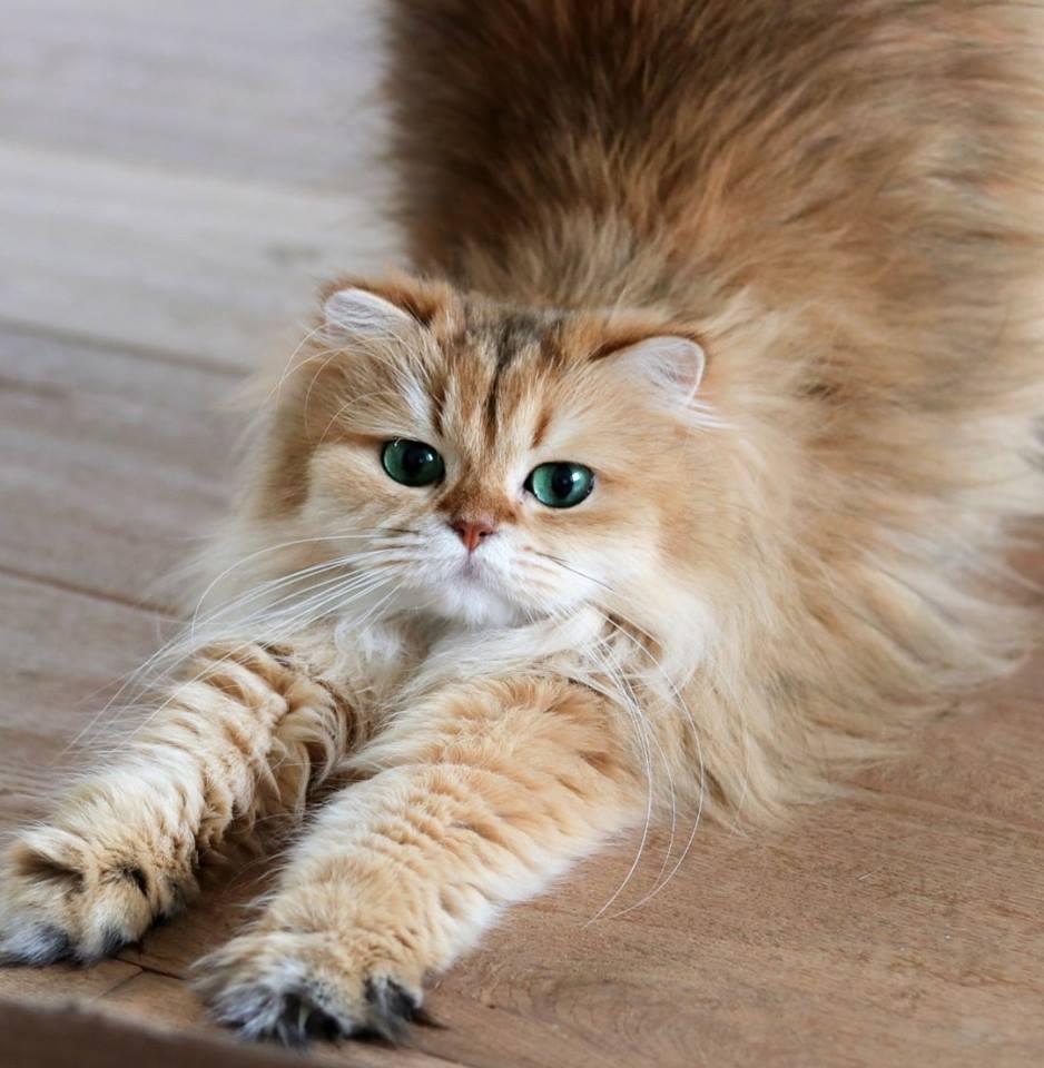 gatto (3)