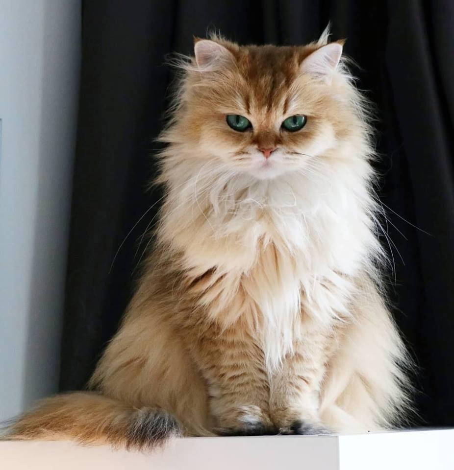 gatto (4)