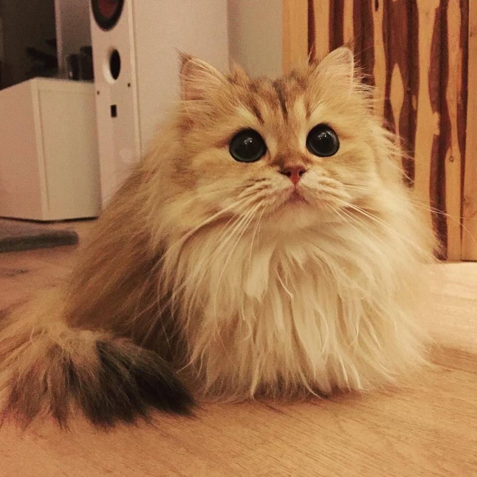 gatto (7)
