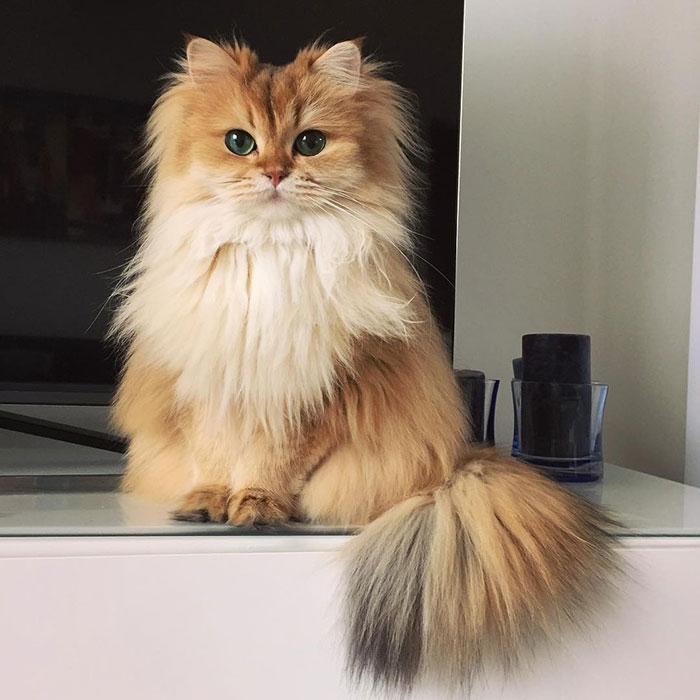 gatto (9)