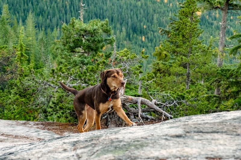 2333242 - A Dog's Way Home