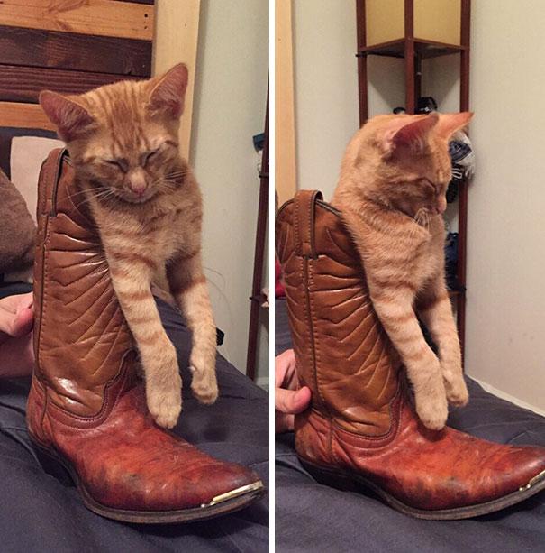 gatti (13)
