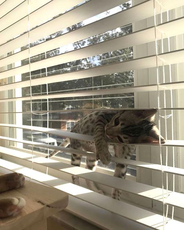 gatti (7)