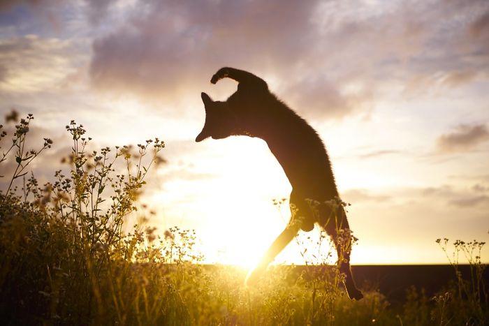 gatti ballerini (1)