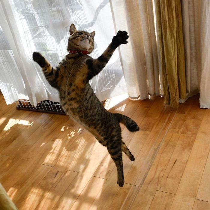 gatti ballerini (12)