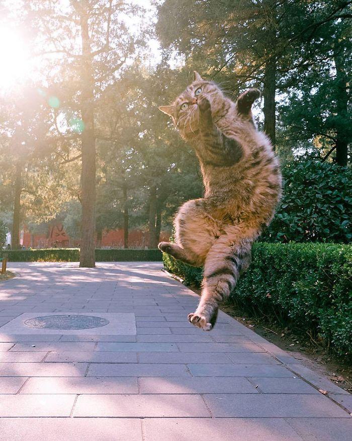 gatti ballerini (13)