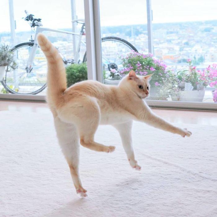gatti ballerini (14)