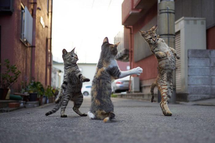 gatti ballerini (15)