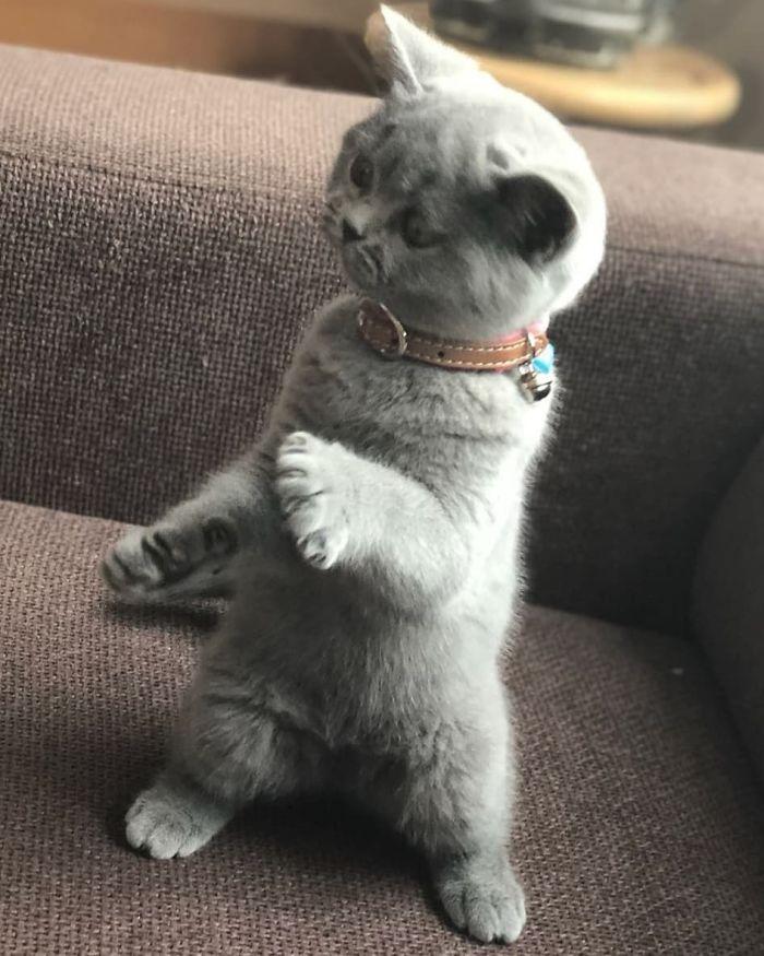 gatti ballerini (17)