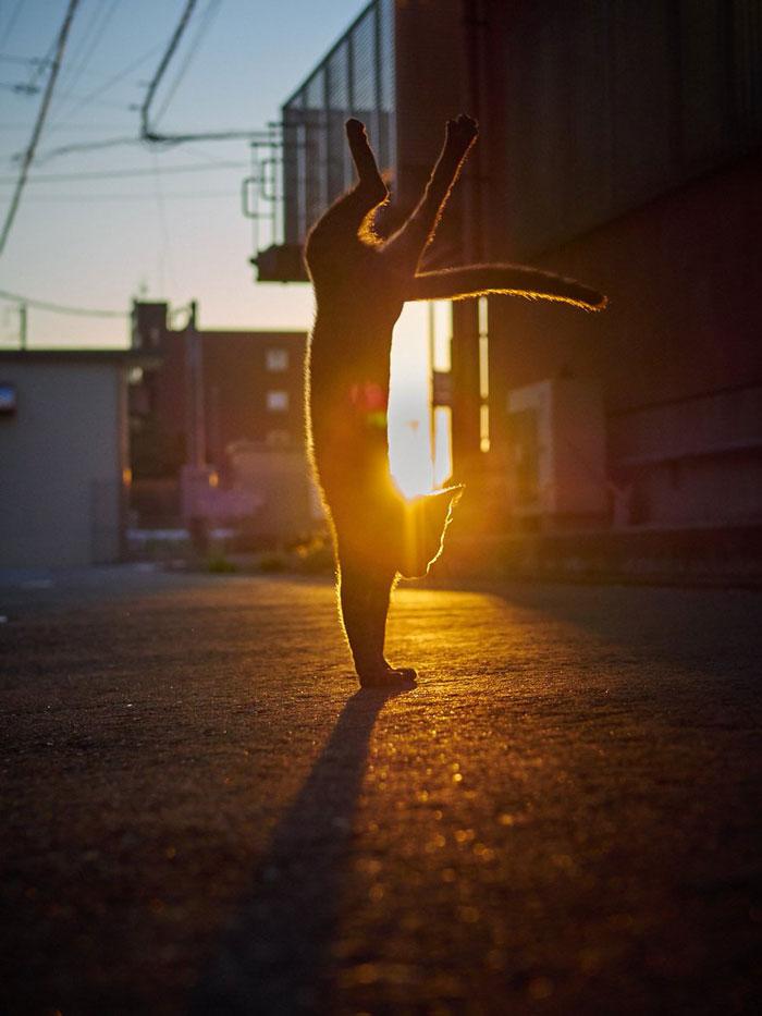 gatti ballerini (2)