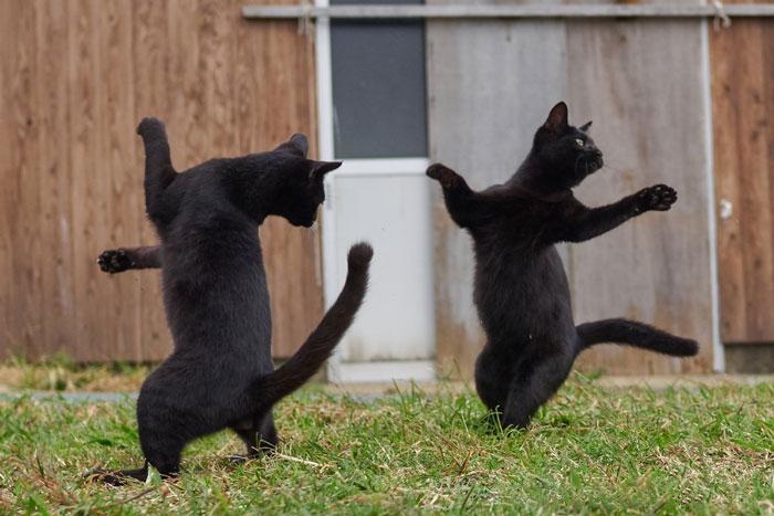 gatti ballerini (20)