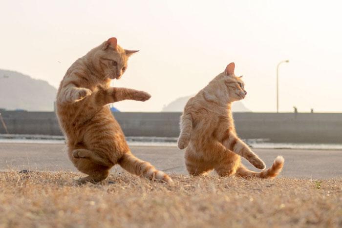 gatti ballerini (21)