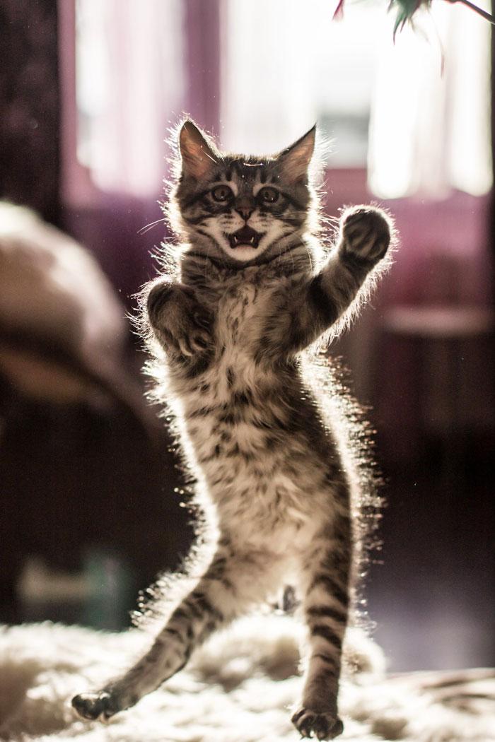 gatti ballerini (5)