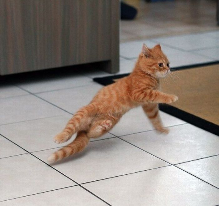 gatti ballerini (6)