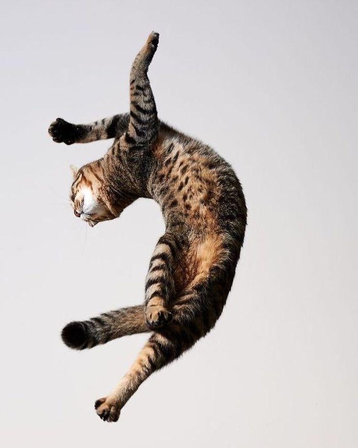 gatti ballerini (7)