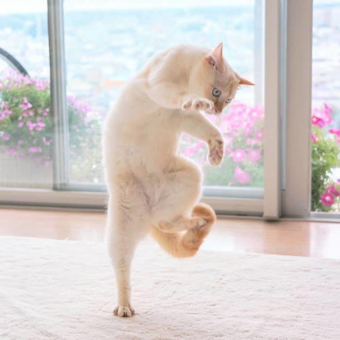 gatti ballerini (9)