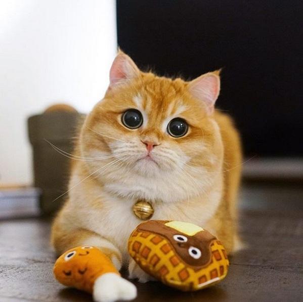 gatto psico14