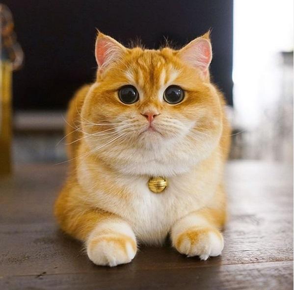 gatto psico15