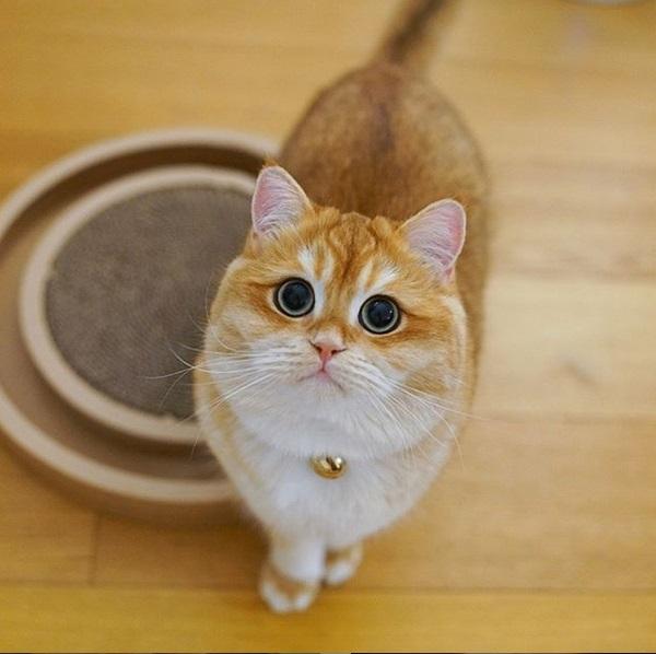 gatto psico2