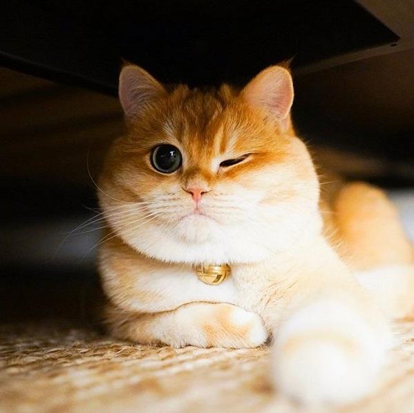 gatto psico4