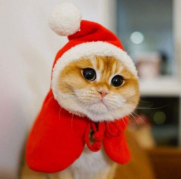 gatto psico5