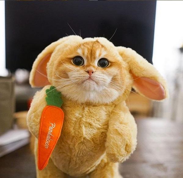 gatto psico8