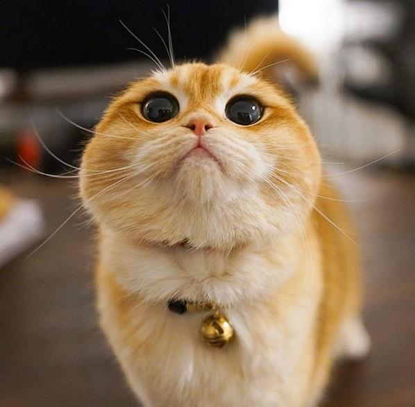 gatto psico9