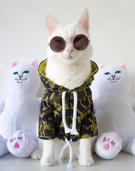 gatto zappa (2)