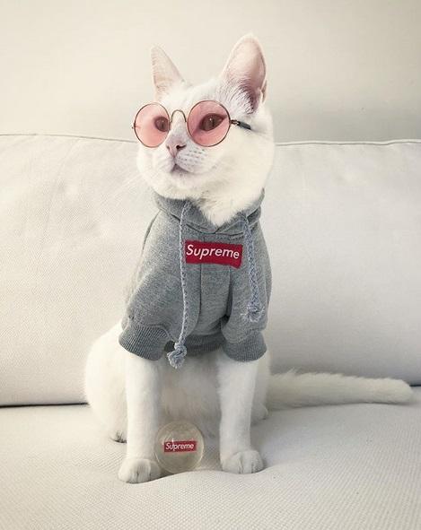 gatto zappa (3)