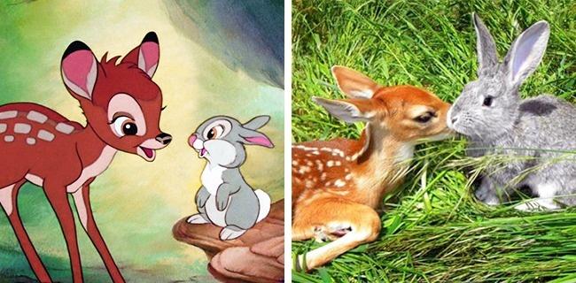Animali nei cartoni animati finzione vs realtà